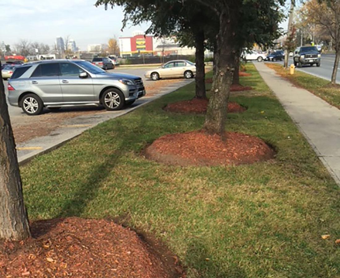 Parking Lot & Landscape Maintenance
